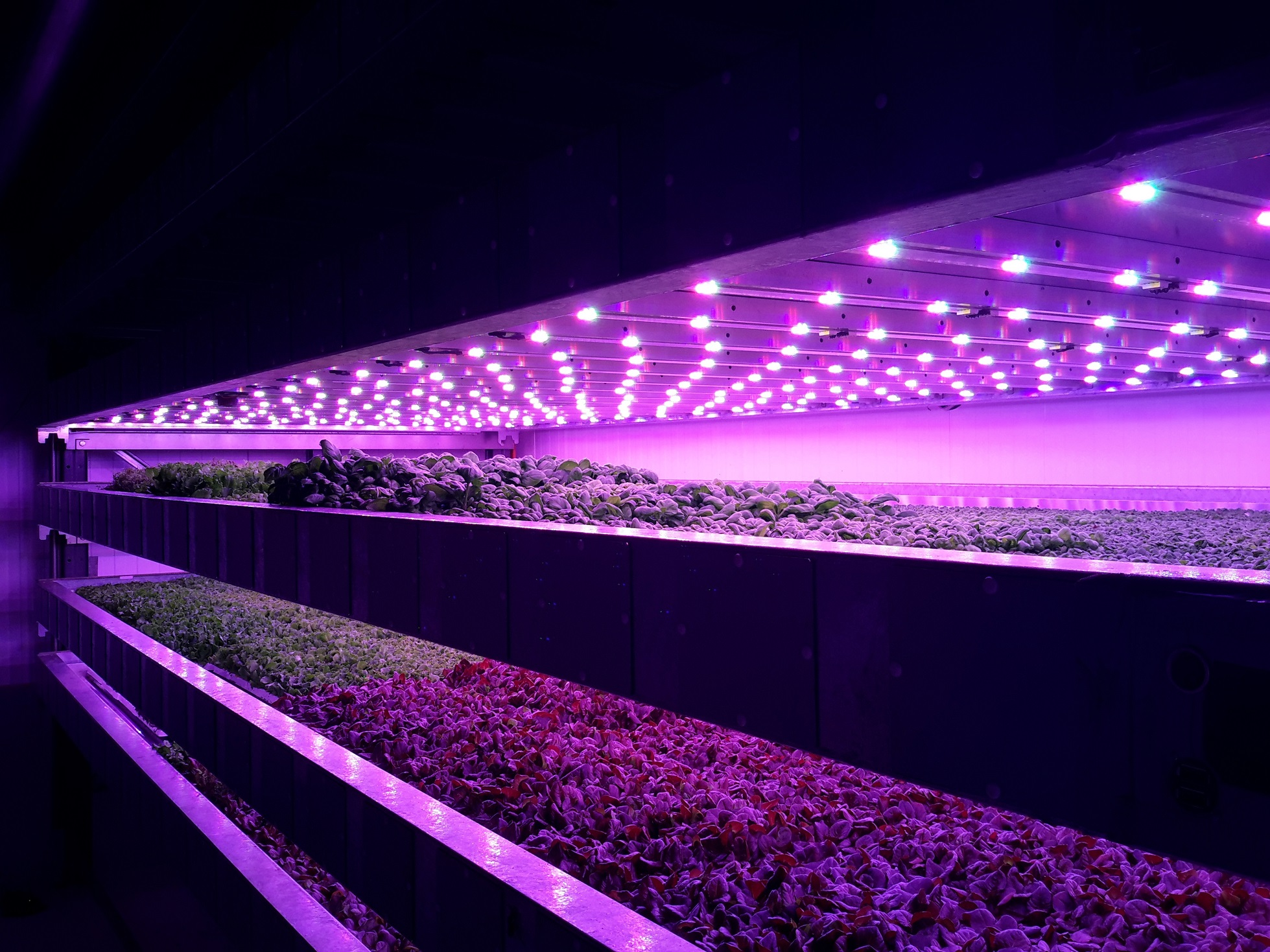 The vertical farm on the JHI campus has been a successful collaboration.