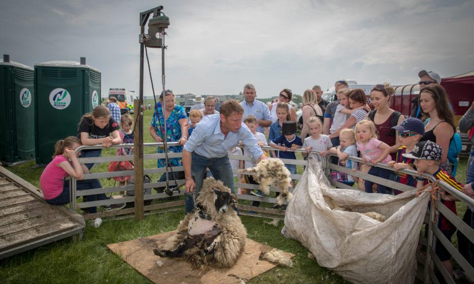 A display of sheep shearing by Stuart Robinson.