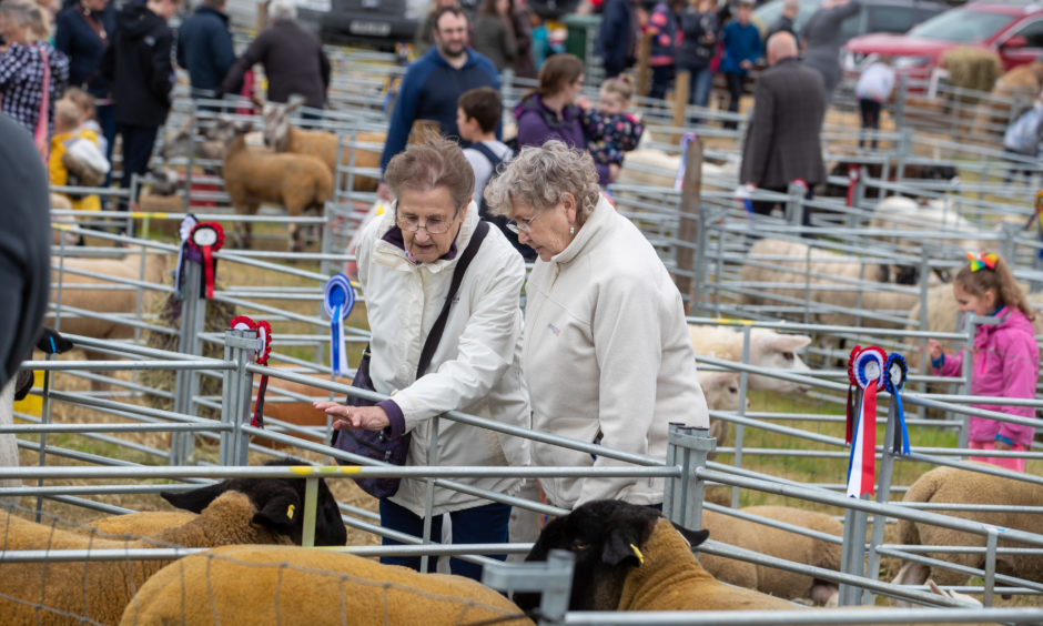 Locals visiting the West Fife Show admire the livestock on show.