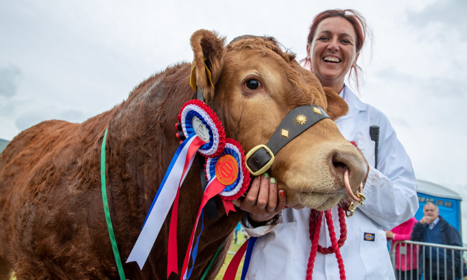 """Kim Brown with the champion British Limousin """"Reid's Orion""""."""