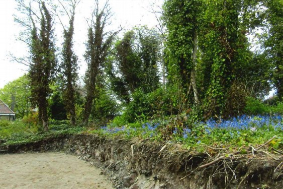 Part of the garden where trees were felled.