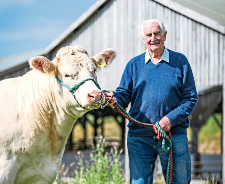 Major David Walter has been breeding Charolais cattle for 50 years.