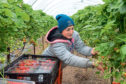The UK Government's pilot seasonal agricultural workers scheme was criticised for not providing enough staff to meet Scotland's requirements.