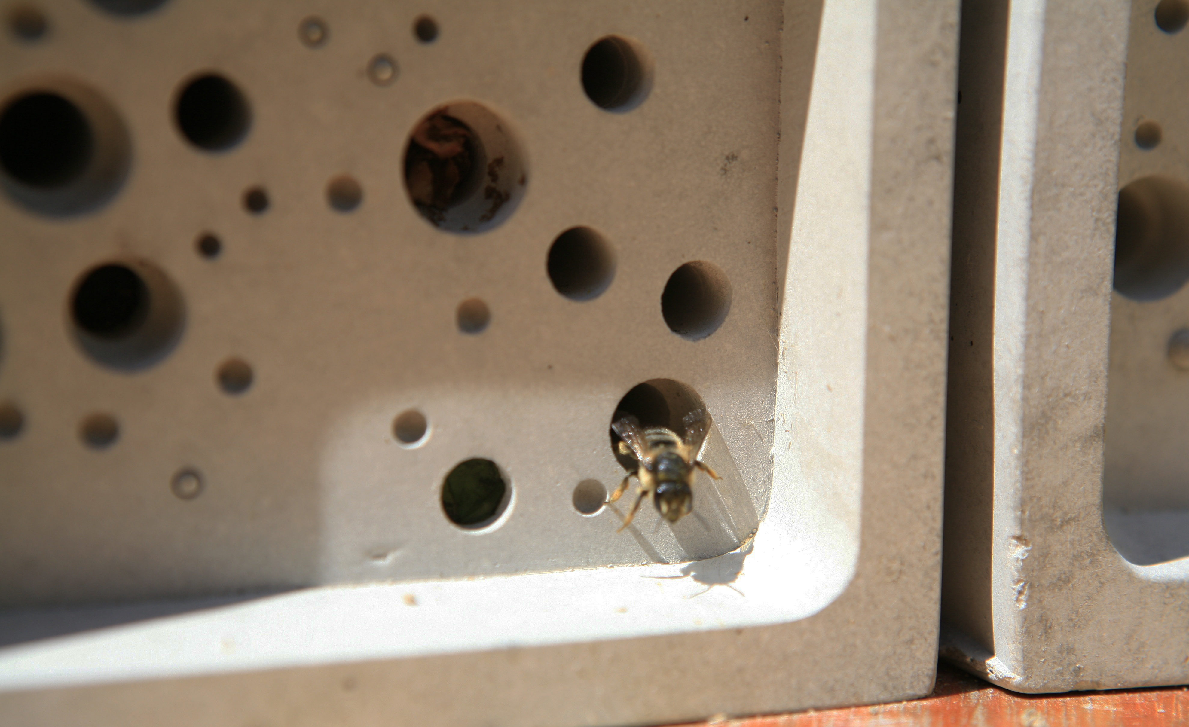 Solitary bees can nest in the Bee Brick.