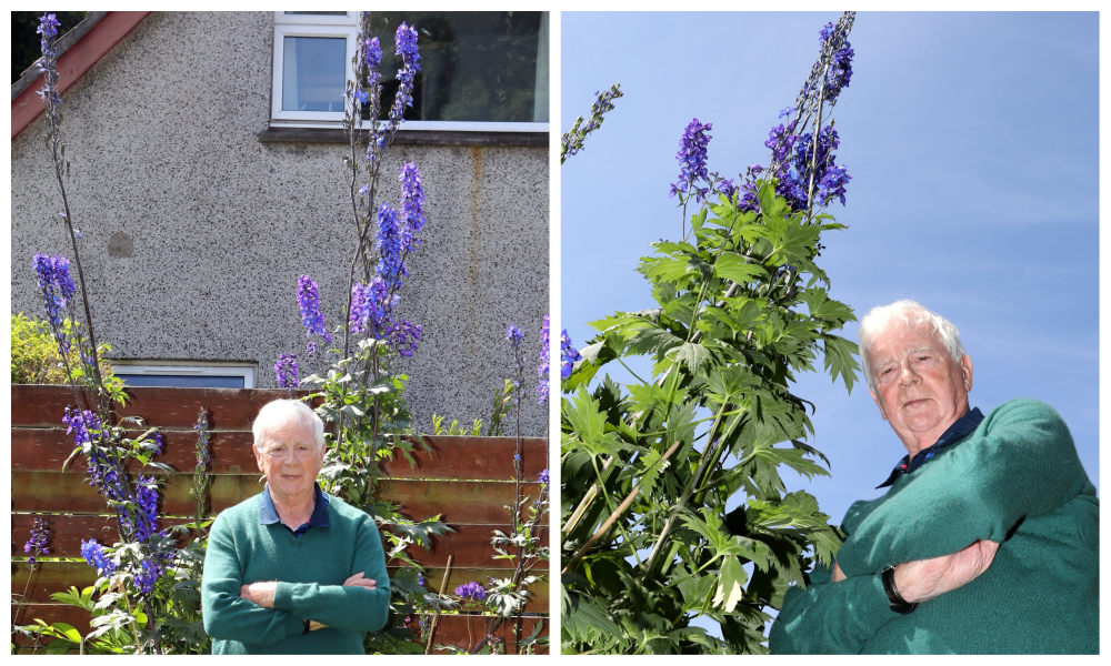 Graham Wise of Broughty Ferry, with his 10ft 6ins Delphinium, which could be a record.