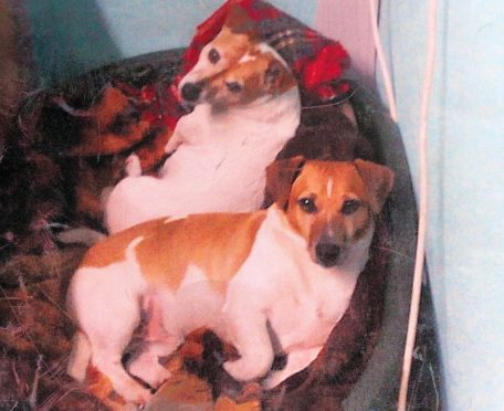 Max (front) was killed on July 20 last year.