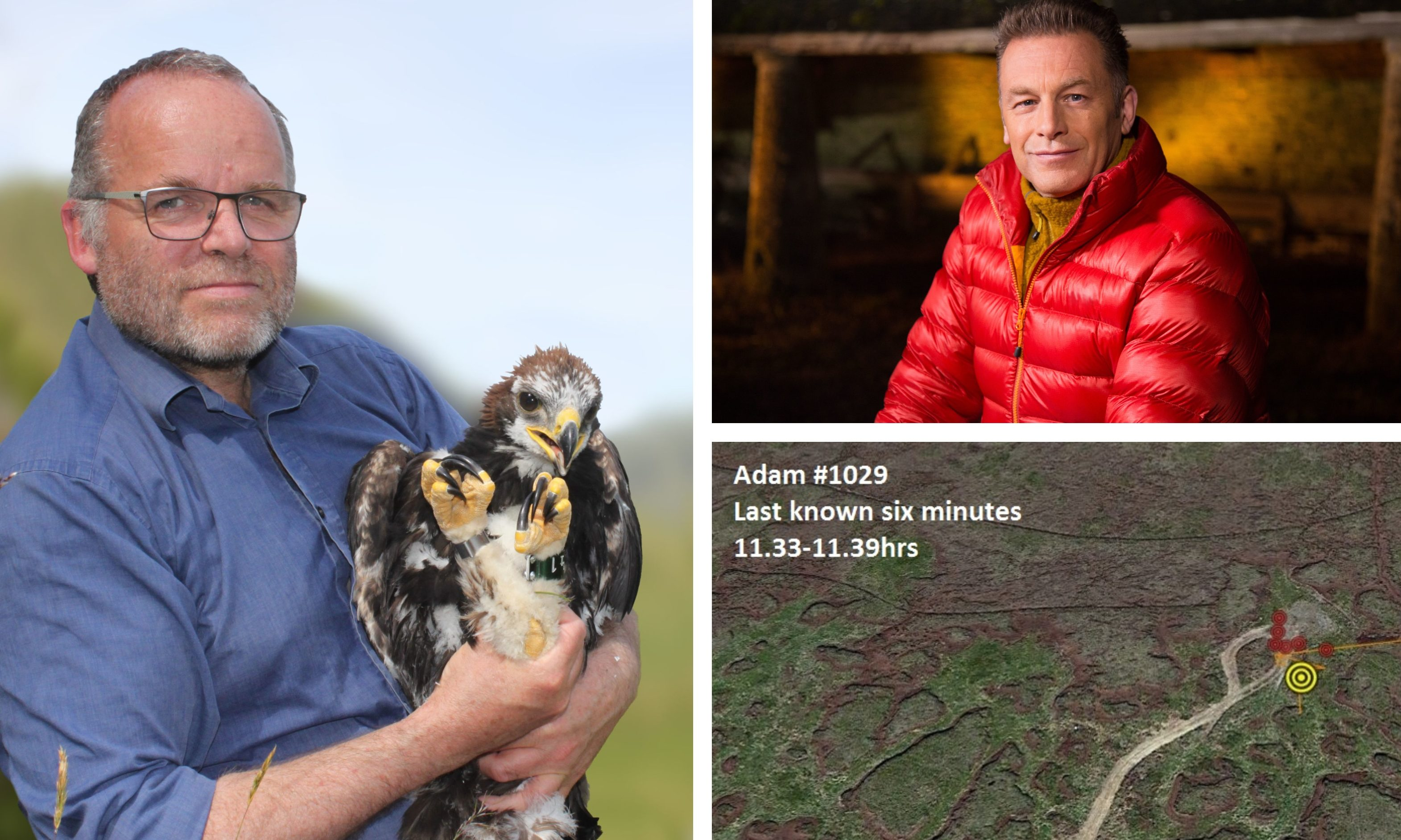 Andy Wightman MSP with young golden eagle Adam (left) and Chris Packham (top right). Bottom right: the last known location of Adam the golden eagle.