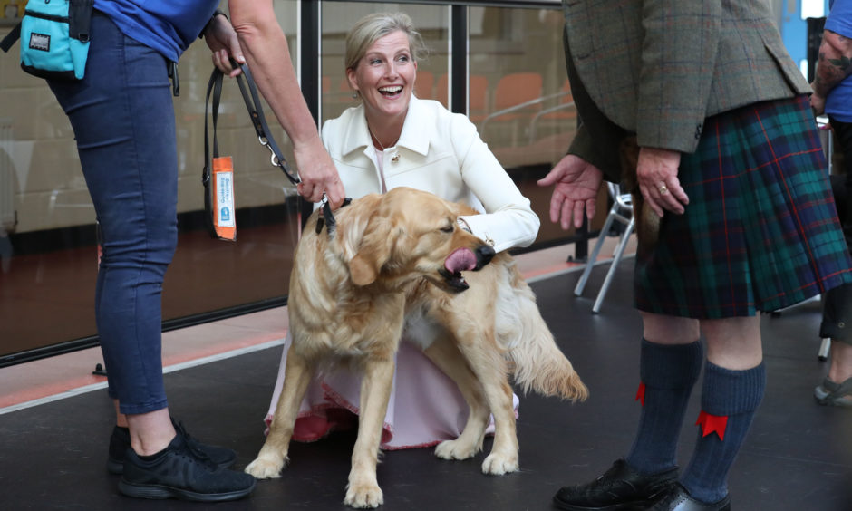 The Countess of Forfar reacts to a guide dogs interest in the Provosts sporran during a visit to the Guide Dogs training centre in Forfar.