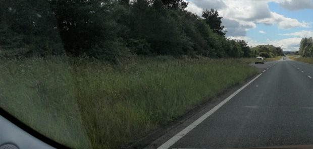 Grass left to grow at the side of the road.