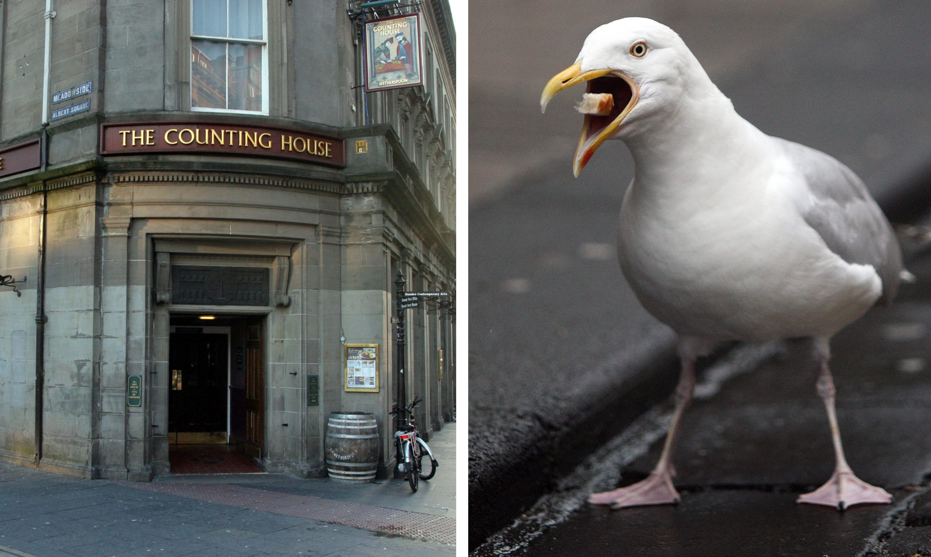 Nesting gulls prevented punters at The Counting House from drinking some of their favourite beers.