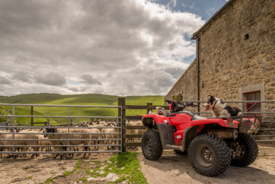 Quad bikes are a target for thieves.
