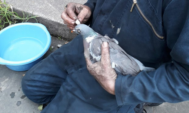 Fife chimney sweep Gary Duncan cleans up the rescued pigeon