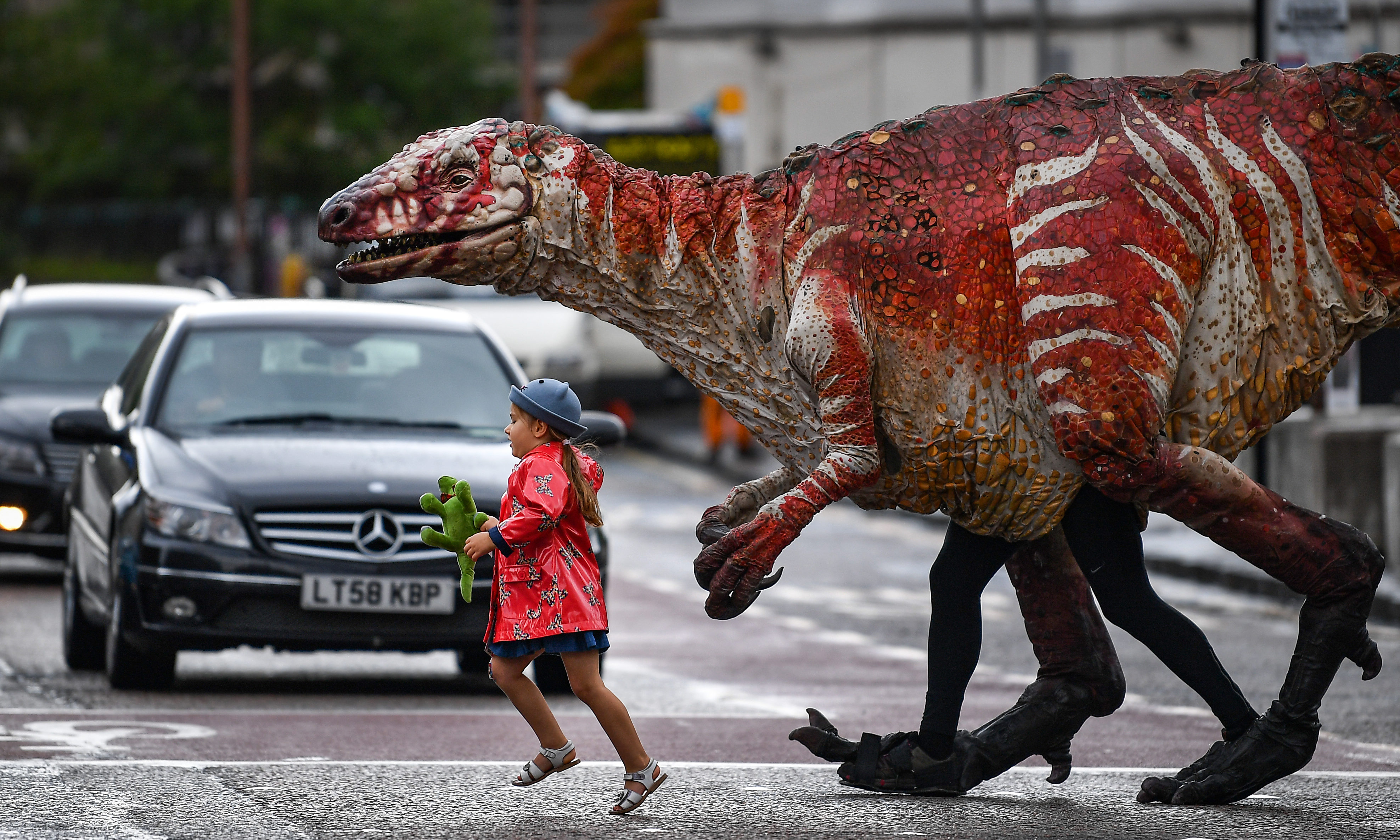Freya Smith aged three, leads one of Erths giant dinosaur puppets across the road in Edinburgh. Australian theatre company Erth presents their best-selling show Dinosaurs Zoo as part of Underbellys Fringe programme. Featuring giant dinosaur puppets which walk, roar and blink like the real thing, Dinosaurs Zoo is a perfect example of edutainment for children of all ages, taking place at the McEwan Hall every day of the Fringe at 11am.