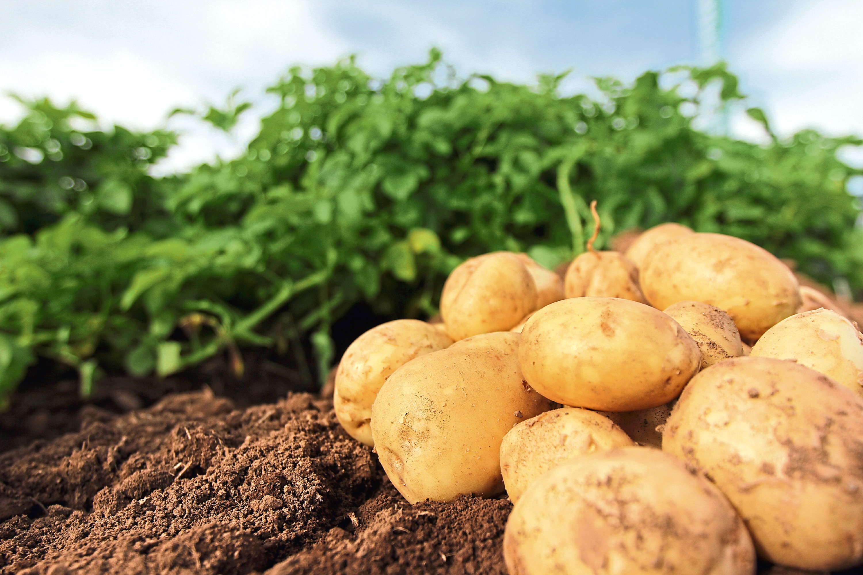 Potatoes in Practice takes place on the outskirts of Dundee.