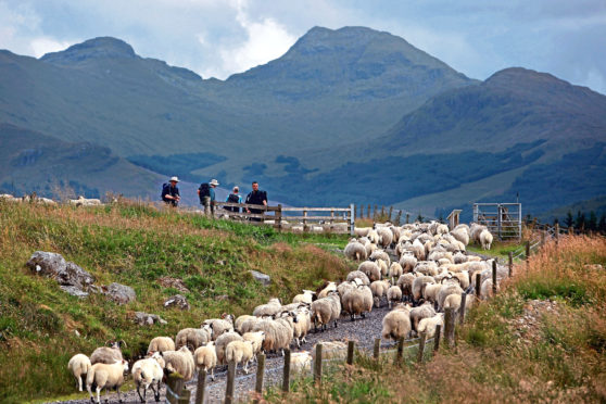 A successful agricultural industry brings benefits to the wider Scottish rural economy.