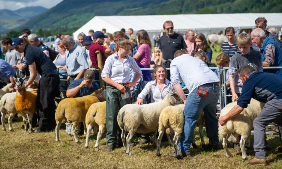 Judging of one of the sheep categories.