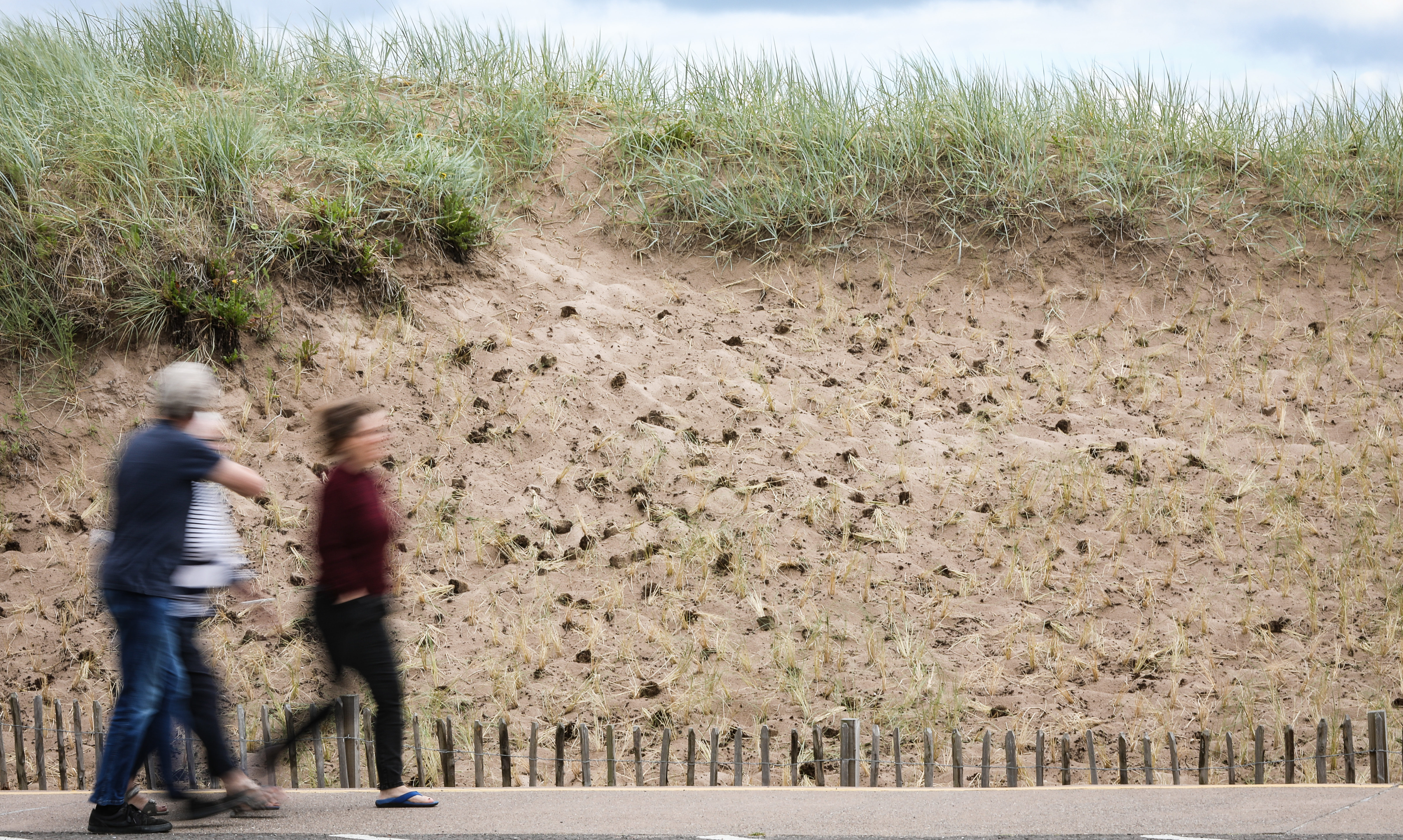Vandals have uprooted marram grass planted to stabalise sand dunes in Broughty Ferry.