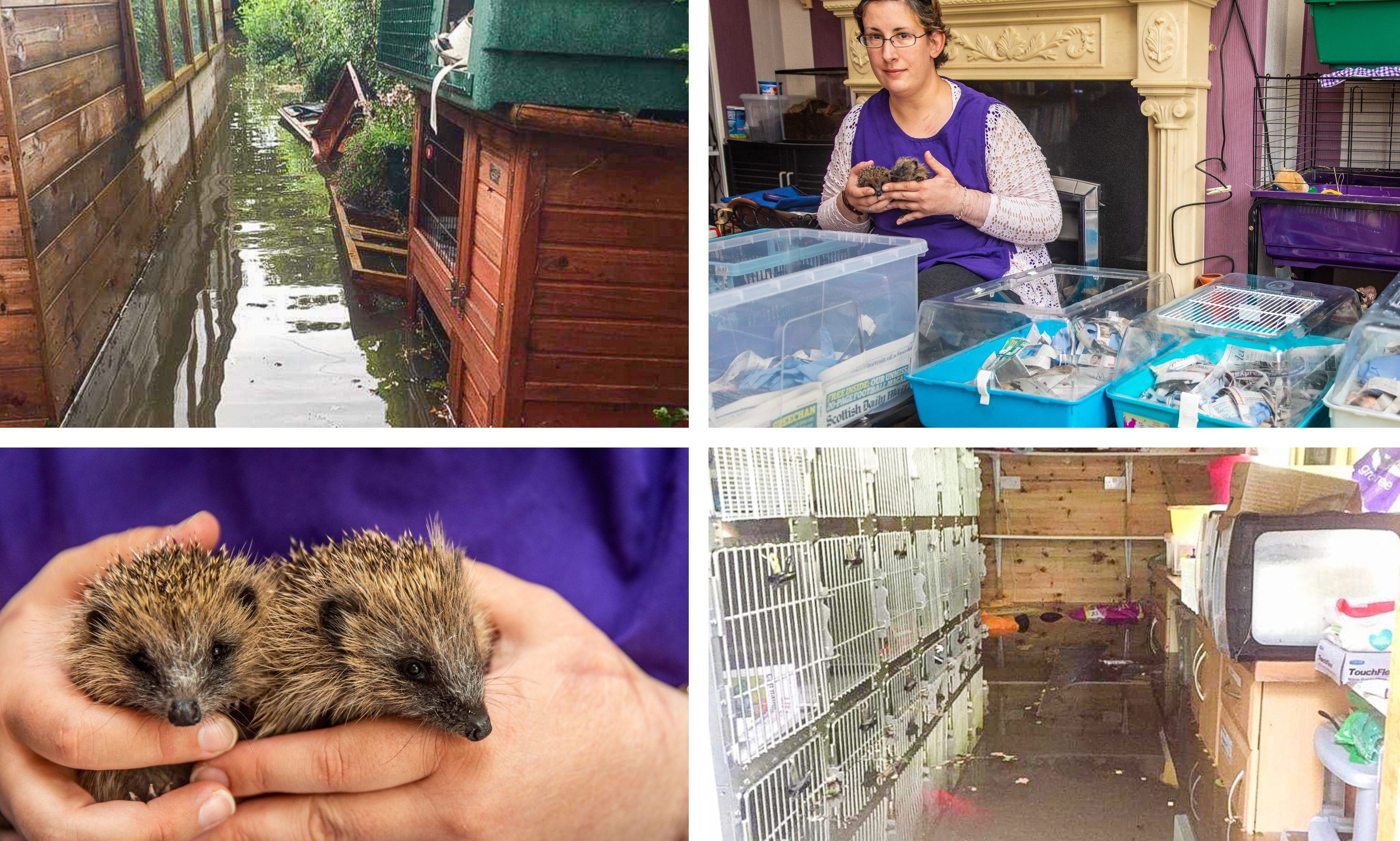 The Forth Hedgehog Hospital in Rosyth was hit by the floods.
