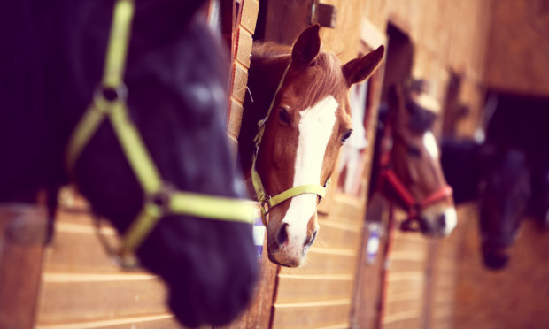 Horses are being put in danger