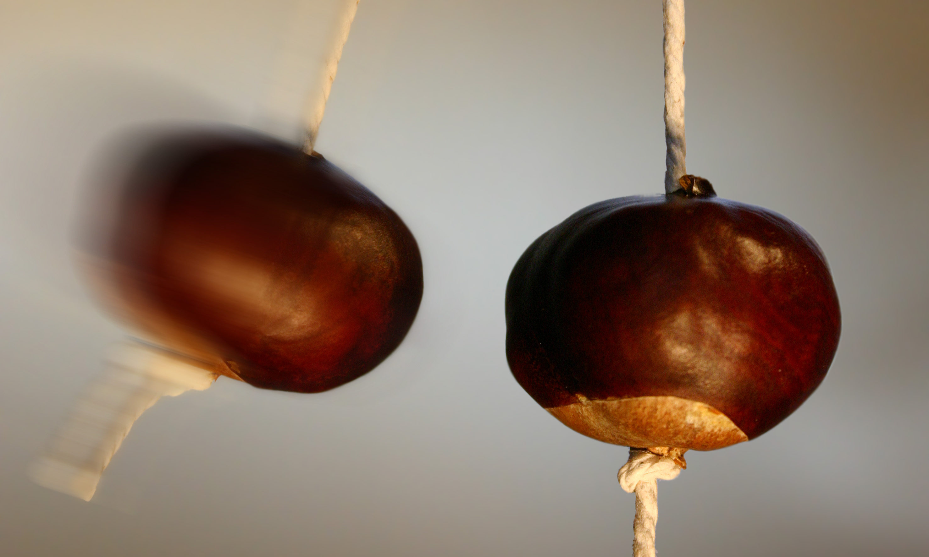 Conkers could soon be a thing of the past.