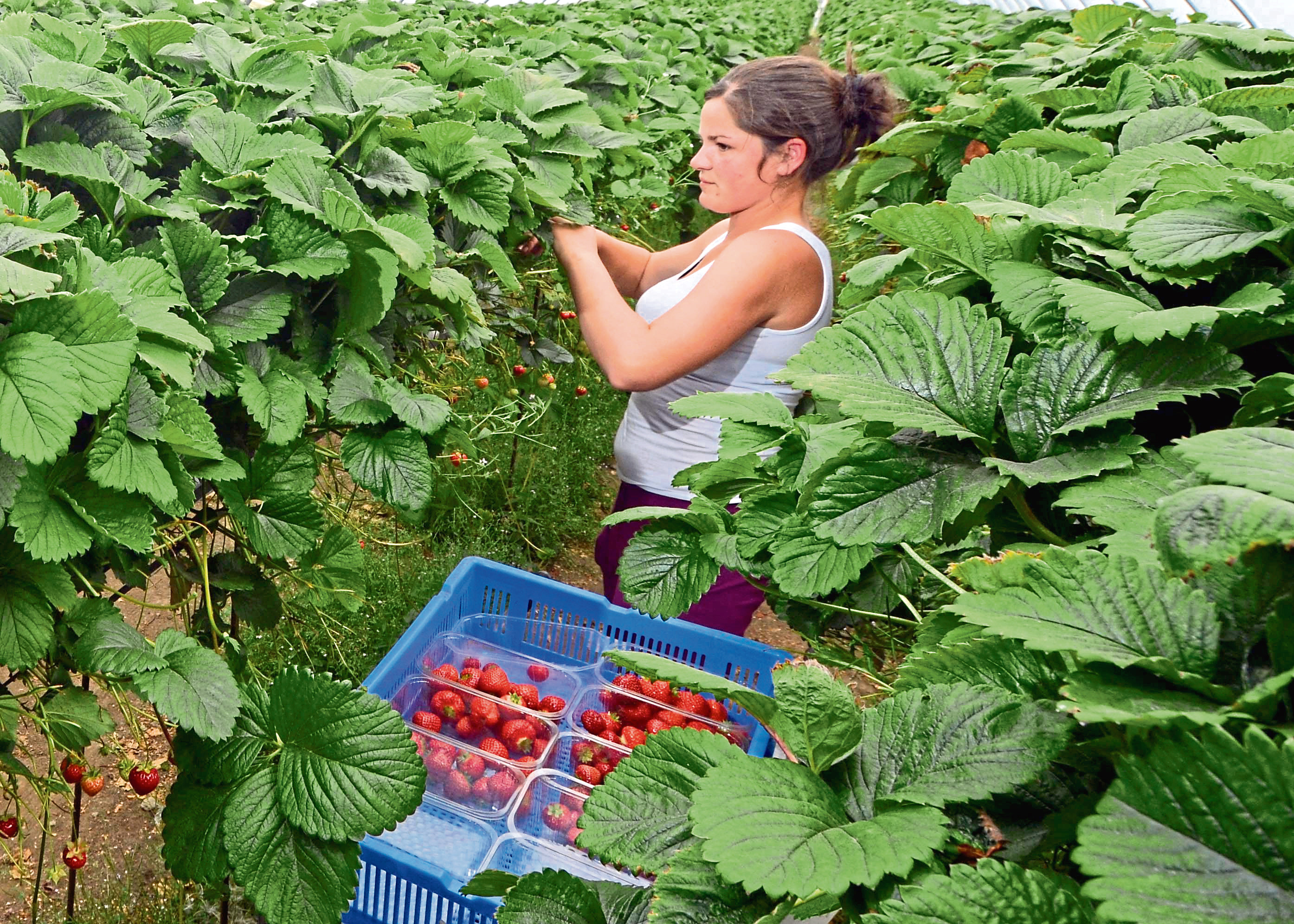 """The farmers' union says many businesses """"will be unproductive"""" without non-UK workers."""