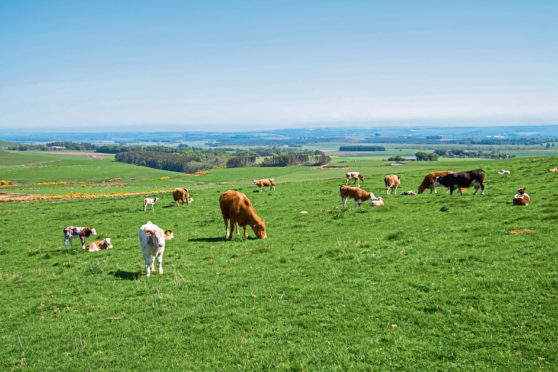 Balquhadly Farm overlooks Strathmore.