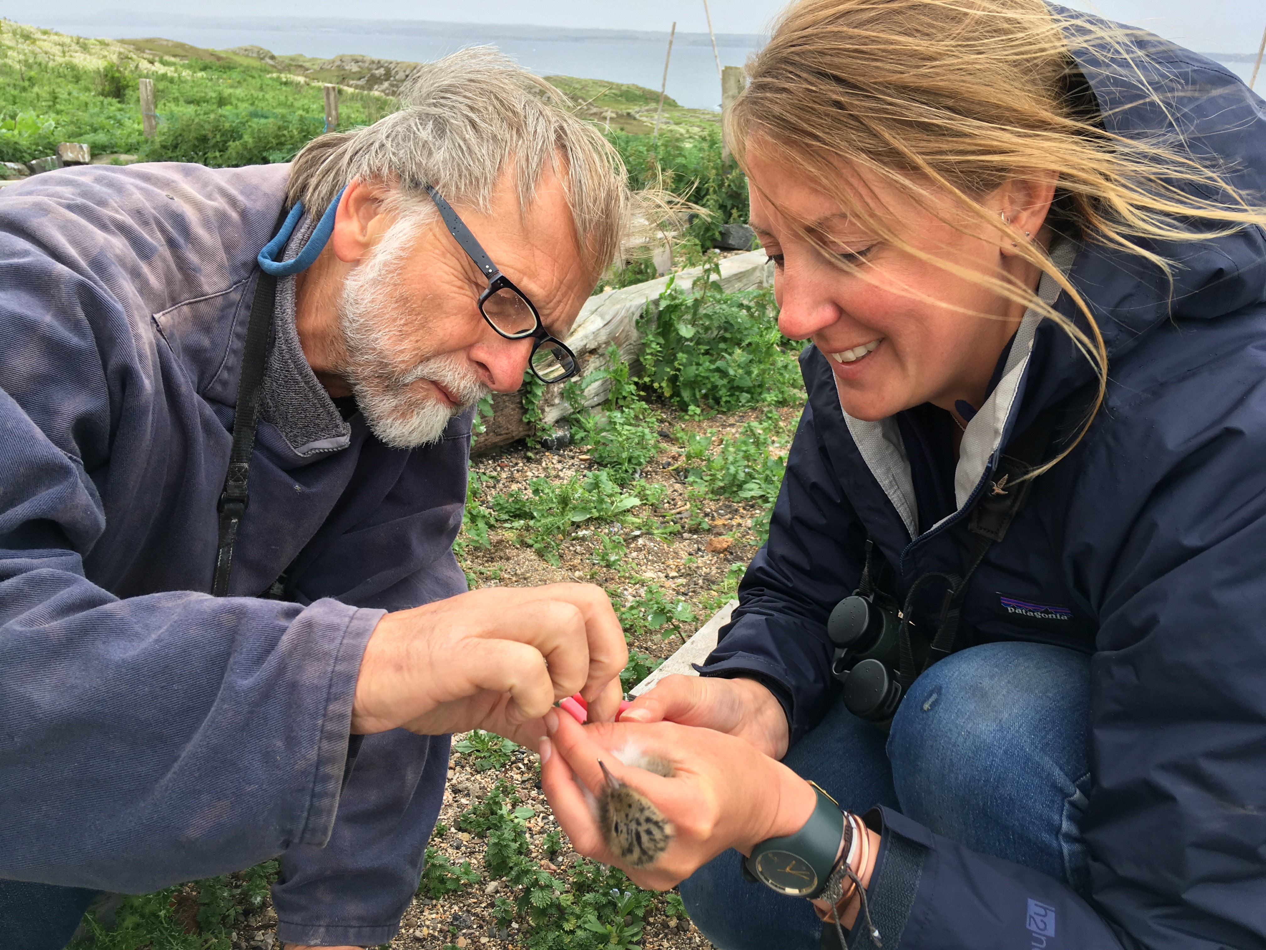 Dr Chris Redfern and Bex Outram, SNH, with Hybrid chick.