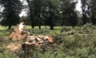 Giant lime trees have been felled at South Inch, Perth