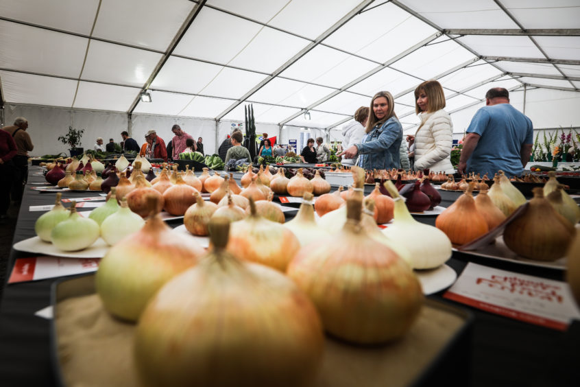 Onions at the festival.