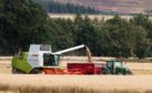 Spring barley is expected to see a rise in yield and production despite a 3% drop in area.