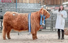 The top-priced Highland female at Oban, Anna of Eilean Mor, made 8,000gns and was shown by Jade Brown.