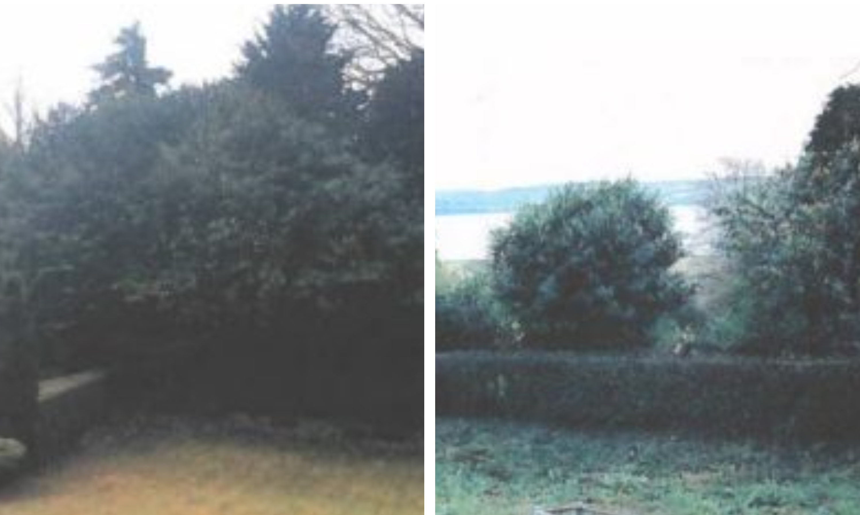 The trees in question, before and after.
