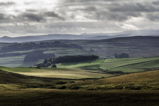 Only half the   farmland on the market in Scotland was available compared to the same period last year.