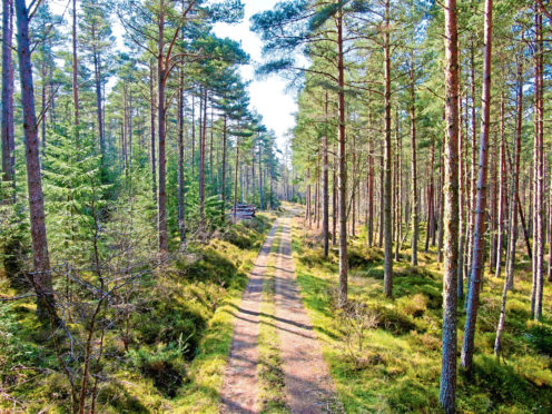 The Scottish Government's planting target of 10,000 hectares was exceeded this year, with 11,210 ha of new woodland.