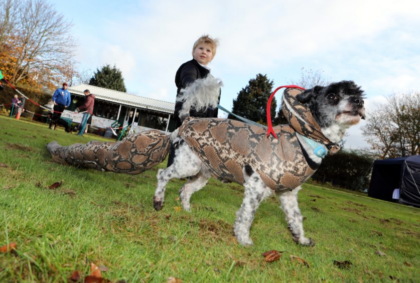 Three-year-old Rueben Mitchell from Monifieth with jack a doodle Fluffy.