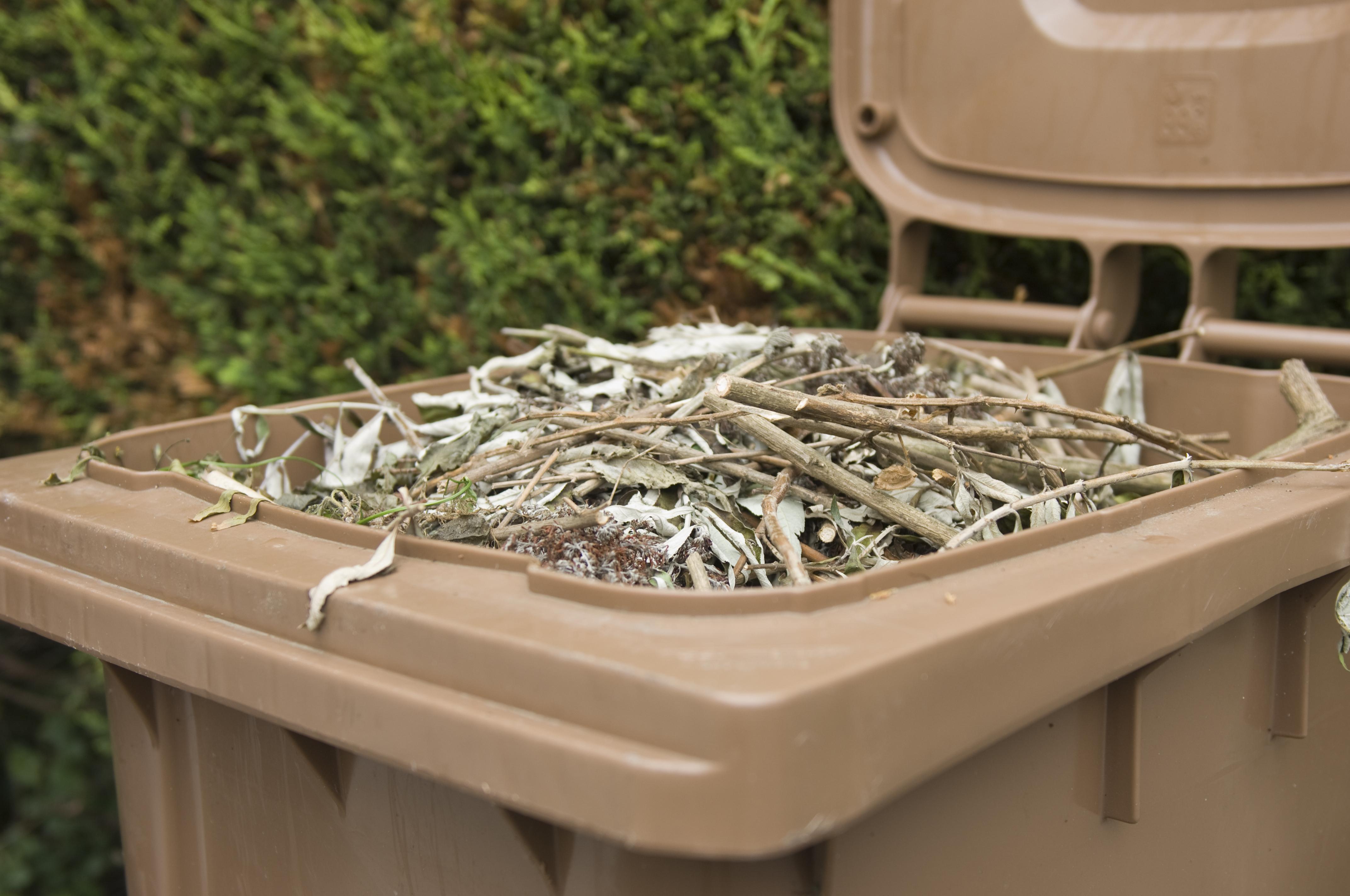Brown wheelie bin used to dispose garden waste.