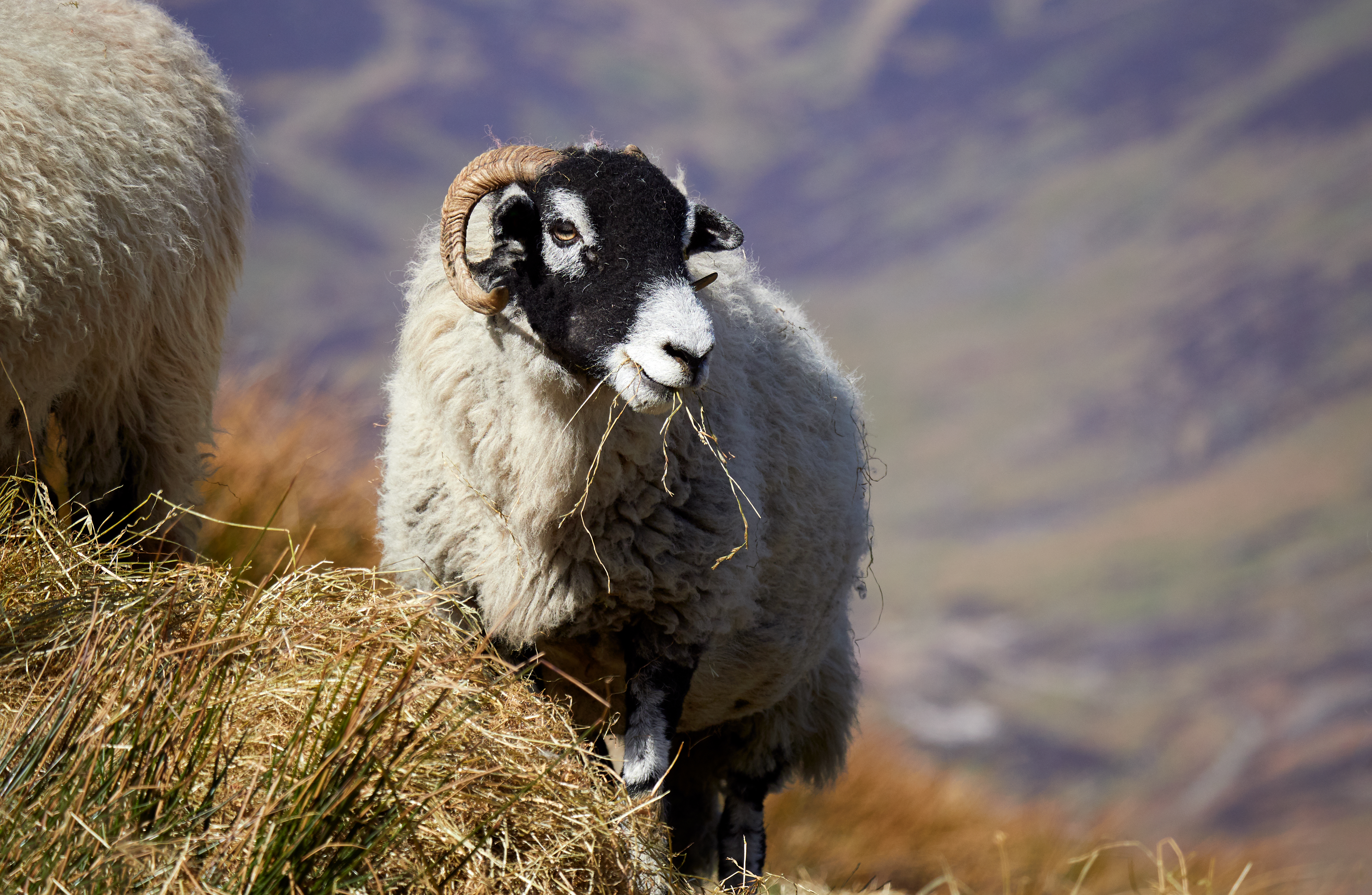 Consumers should be encouraged to think of lambs as a wild product skipping around in fields, according to event chairman John Fyall.