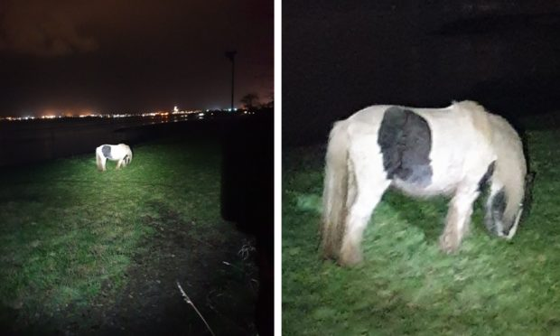 The pony was found on the A92 by Angus officers.