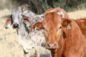 The tags were trialled on livestock in South Africa before being developed for the UK market.