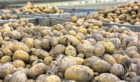 Shoppers are being encouraged to buy potatoes carrying special blue stickers.