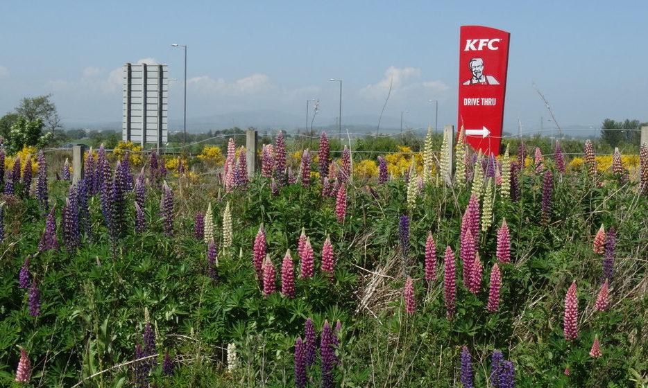 A KFC sign near Forfar.
