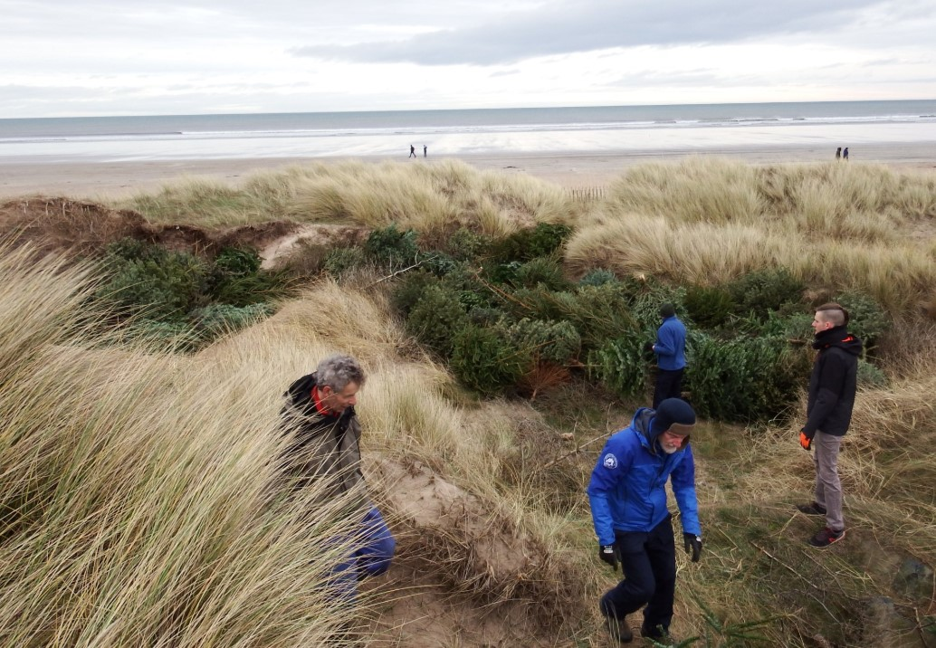 Old Christmas trees will be used to stop coastal erosion in Fife.