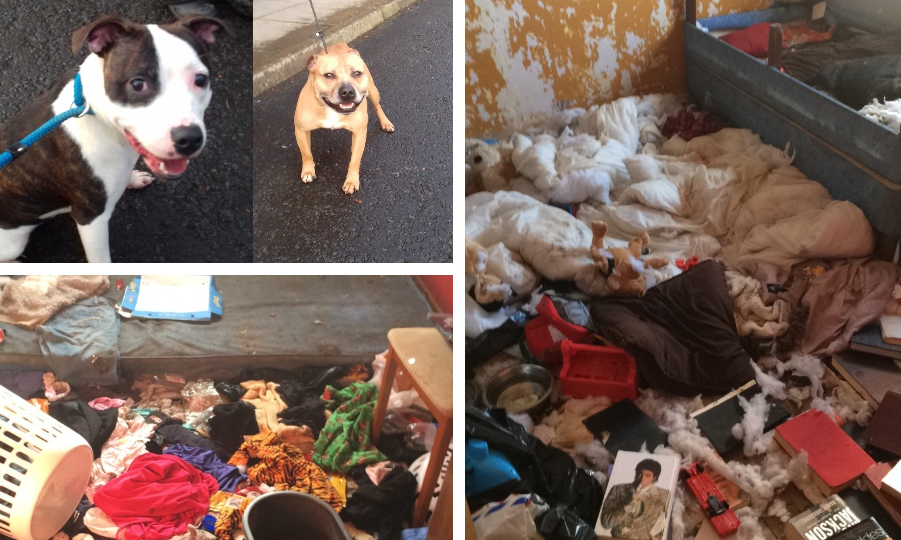Mali and Codi (top left) and the conditions they were exposed to at the property.