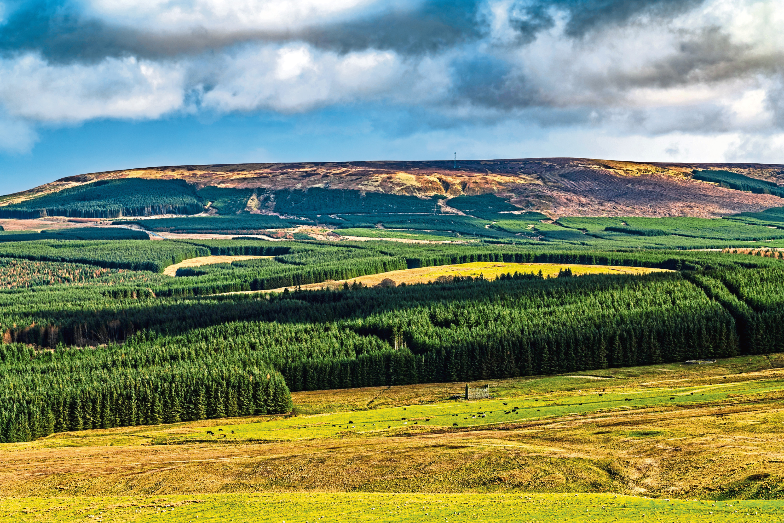 The boom in forestry interest is related to attractive government planting grants and the value of commercial forestry plantations.