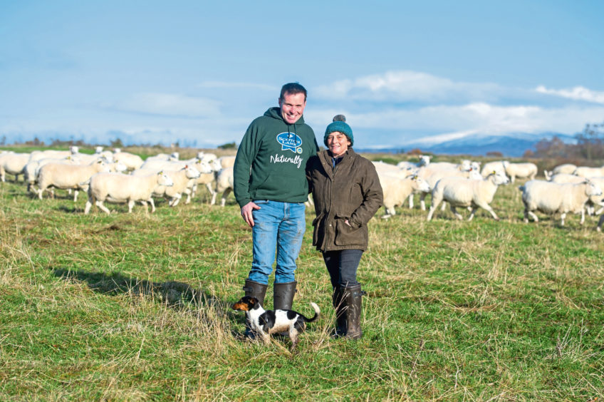 Neil and Debbie McGowan with Sky the Jack Russell and the flock of sheep.