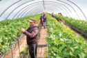 NFU Scotland wants to see a Seasonal Agricultural Workers Scheme in place by January next year.
