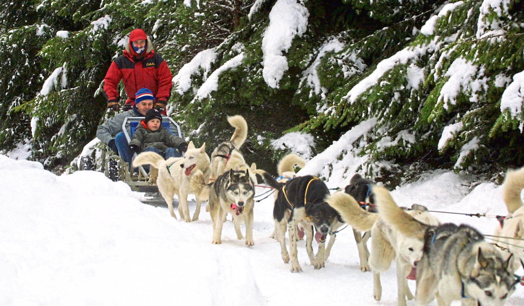 Alan Stewart is giving up his sled dog business due to climate change.