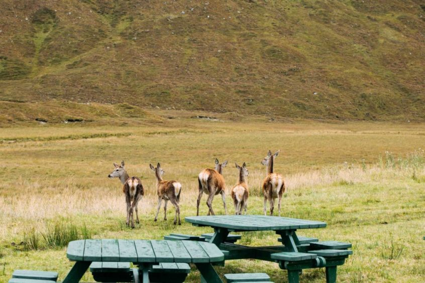 Cluanie Inn has outdoor dining.