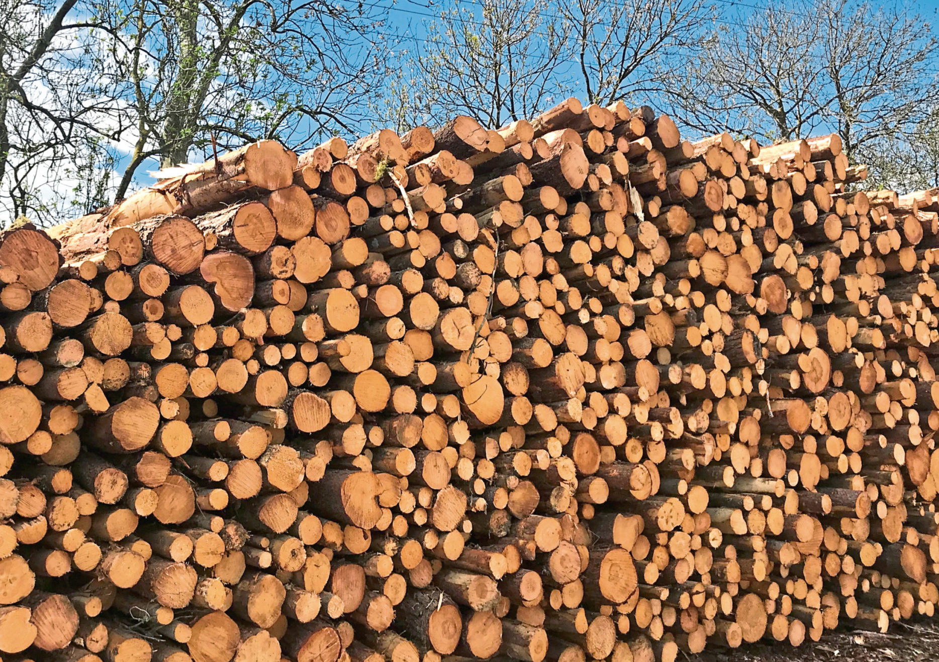 Timber will be bought from sustainable Scottish forests and turned into wood chip on East Balmirmer farm.