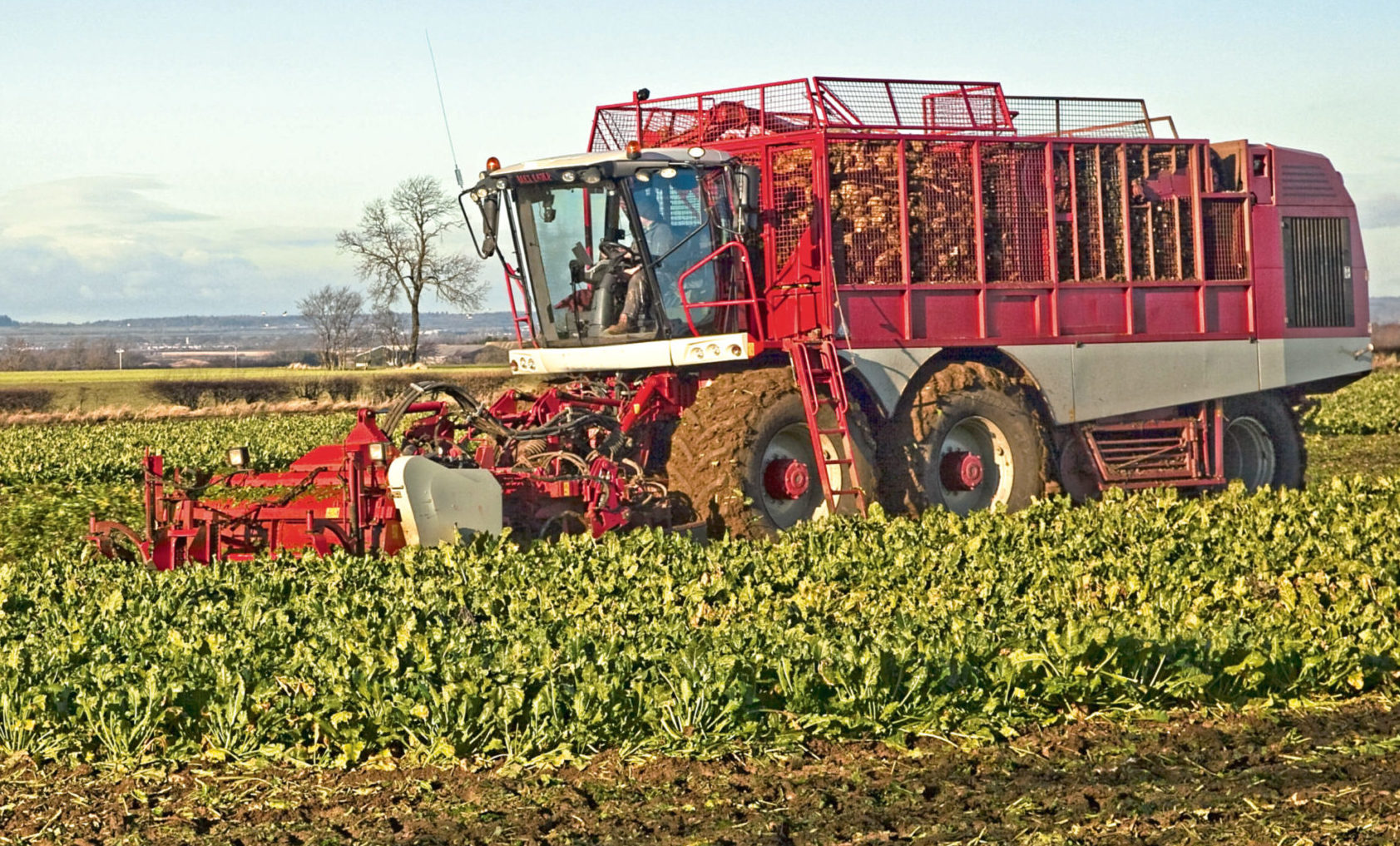 Sugar beet could be grown for bioethanol production in Fife, Angus, Perth and Kinross.